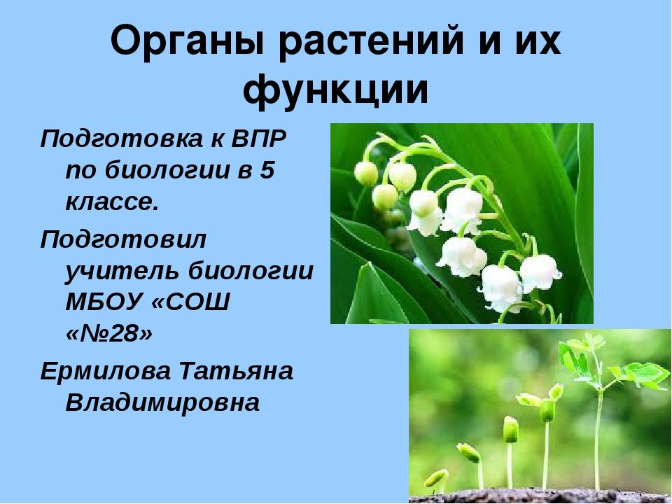 Органы растений и их функции Подготовка к ВПР по биологии в 5 классе. Подгото...