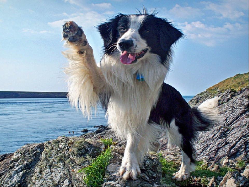 собаки наши верные друзья картинки крайне