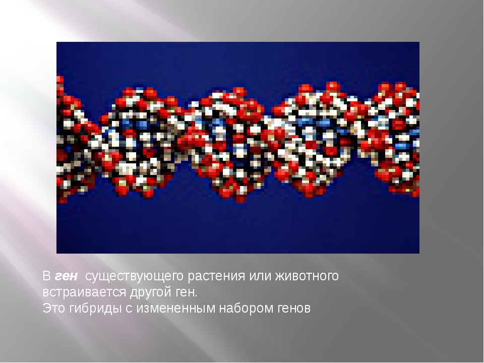 В ген существующего растения или животного встраивается другой ген. Это гибри...