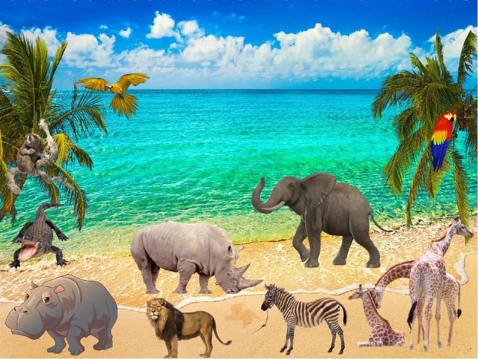 сюжетная картинка животные жарких стран каждая стрижка для