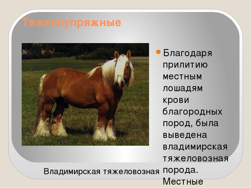 его картинки с описанием пород лошадей приготовил