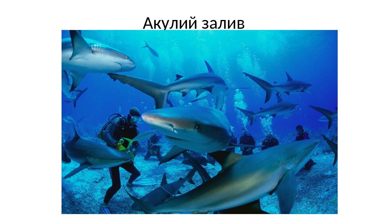 Акулий залив