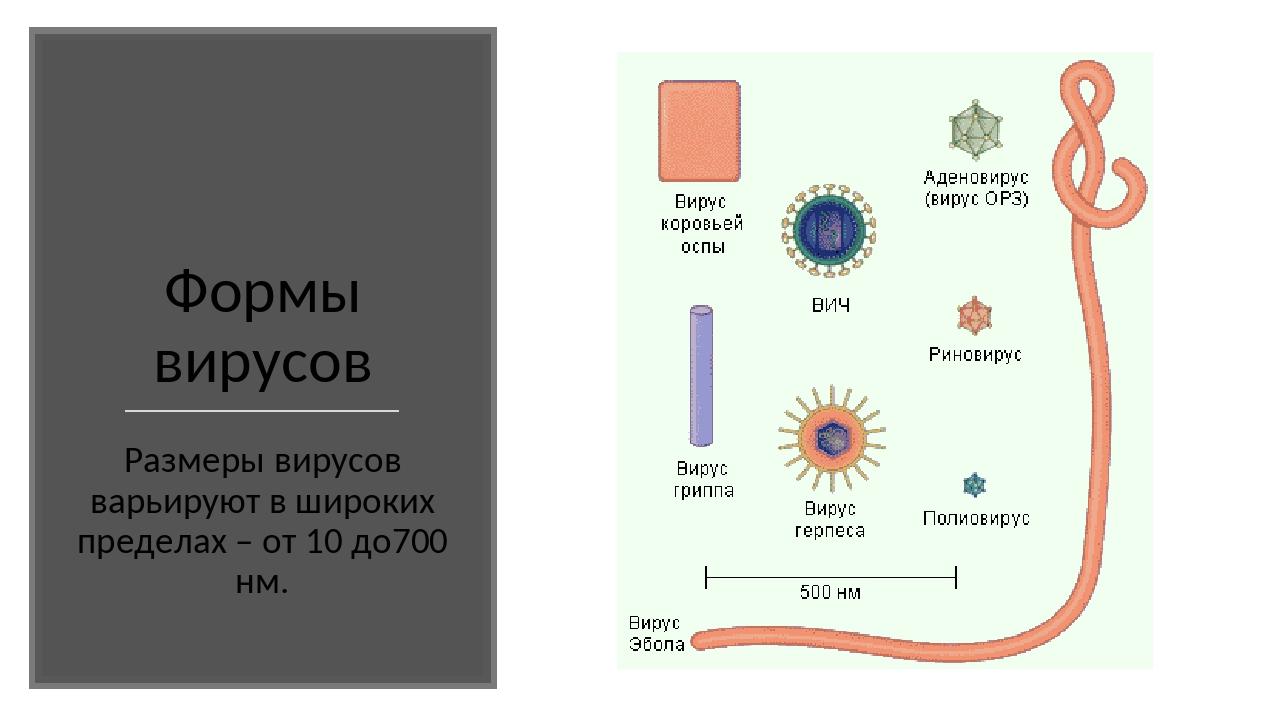 Формы вирусов Размеры вирусов варьируют в широких пределах – от 10 до700 нм.