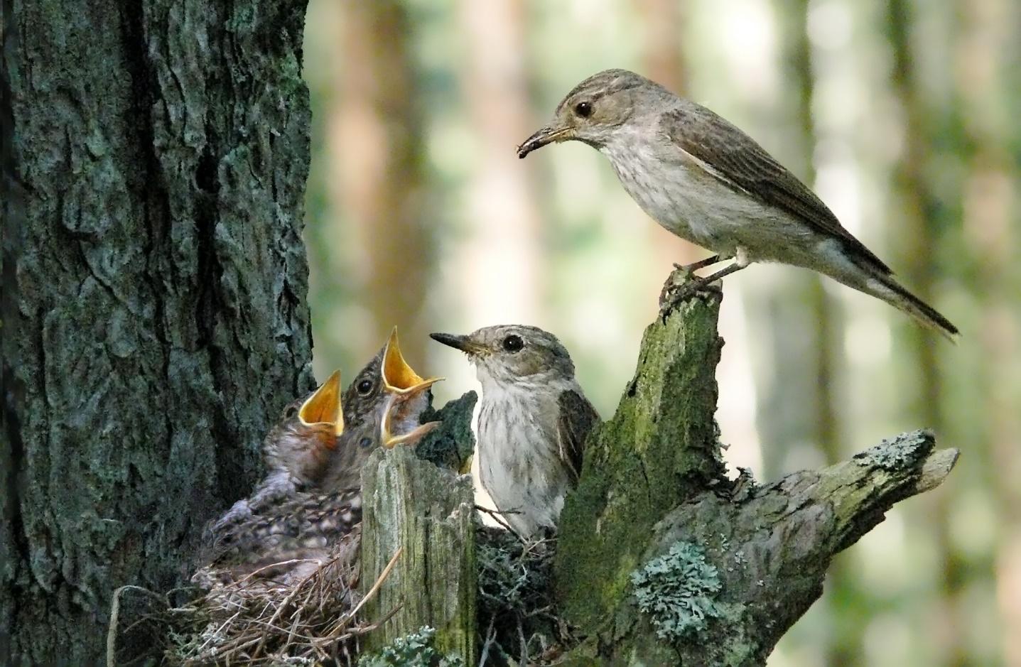 картинки птицы в весеннем лесу мелкие капли