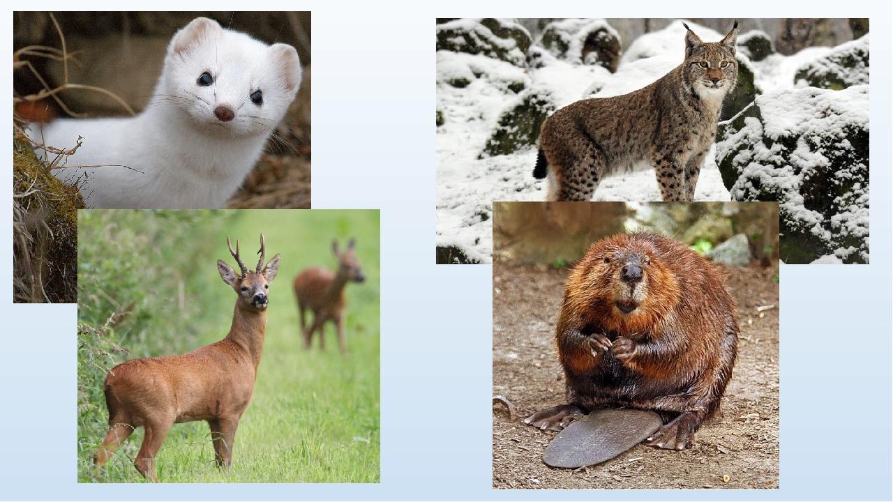 Животные тюменской области фото и названия