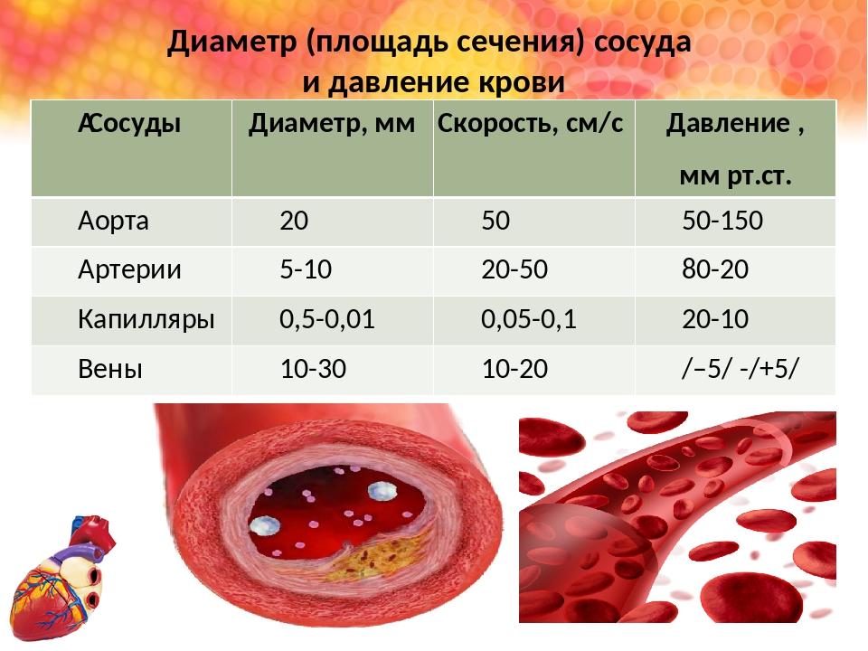 Диаметр (площадь сечения) сосуда и давление крови Сосуды Диаметр,мм Скорость...