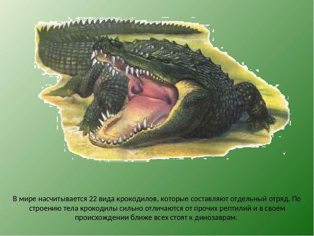 Знакомства крокодил тегос знакомства омск