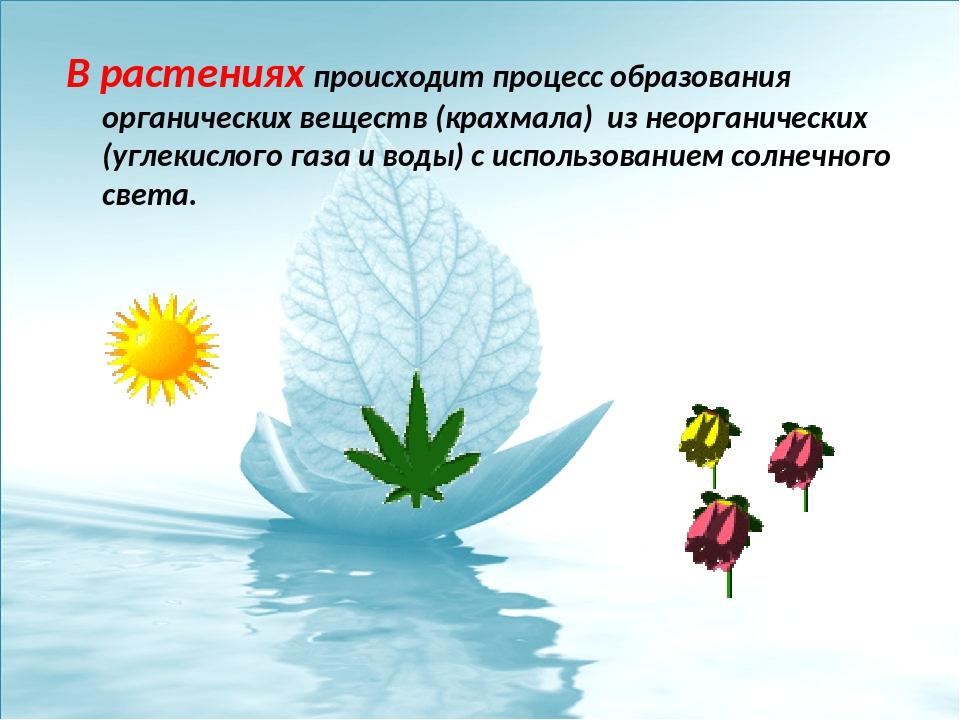 В растениях происходит процесс образования органических веществ (крахмала) из...