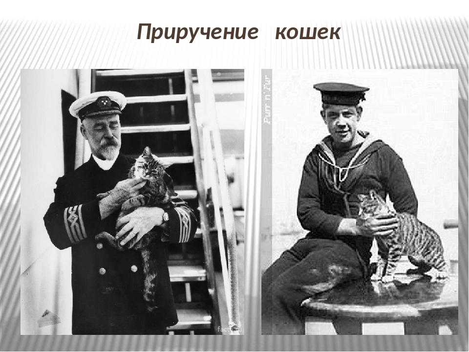 Приручение кошек