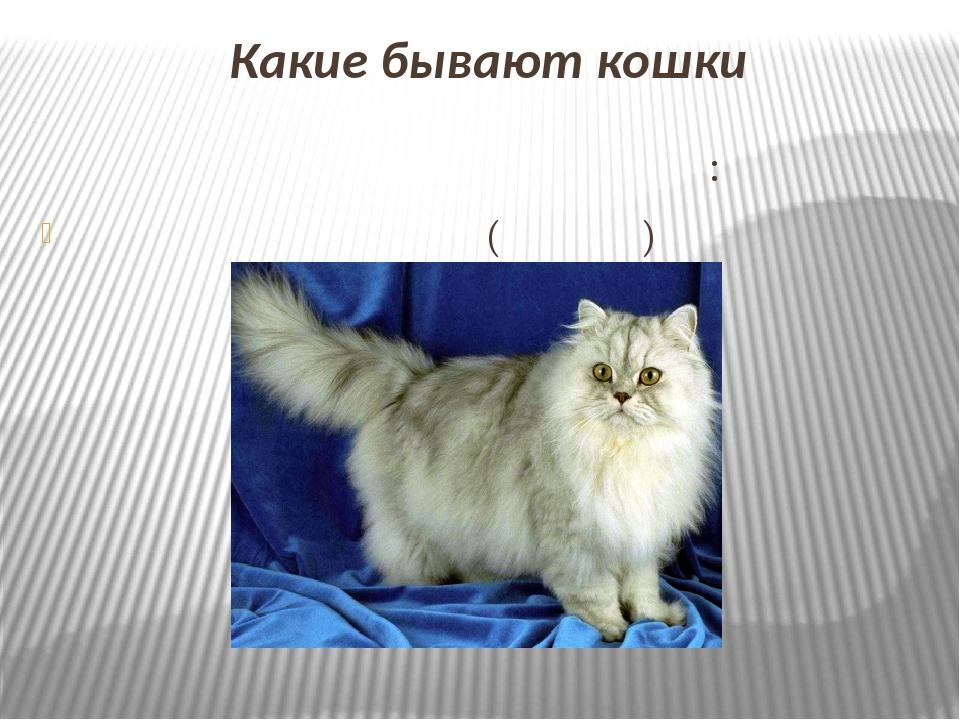 Какие бывают кошки Кошки делятся на три группы: Длинношерстные (персы)