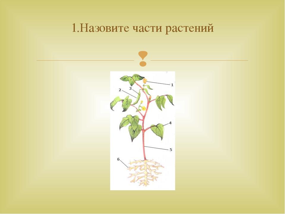 1.Назовите части растений 
