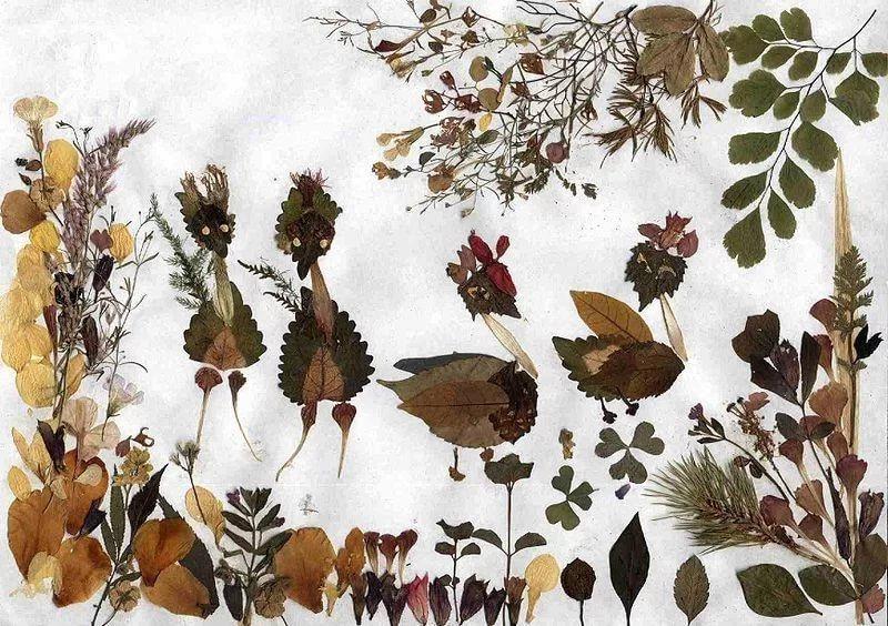 Картинка гербарий для детей