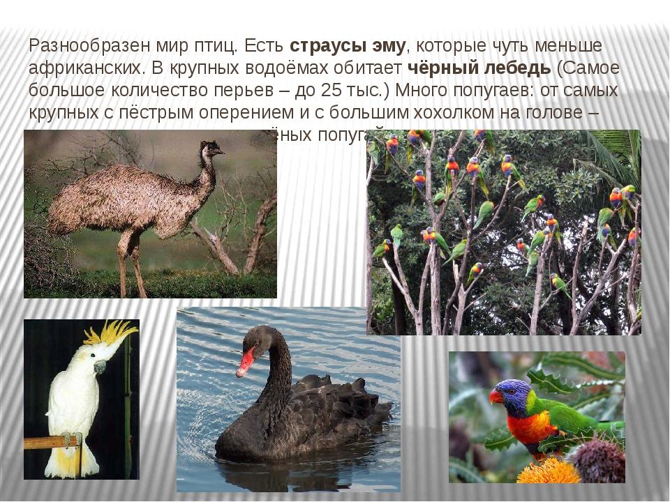 Разнообразен мир птиц. Есть страусы эму, которые чуть меньше африканских. В к...