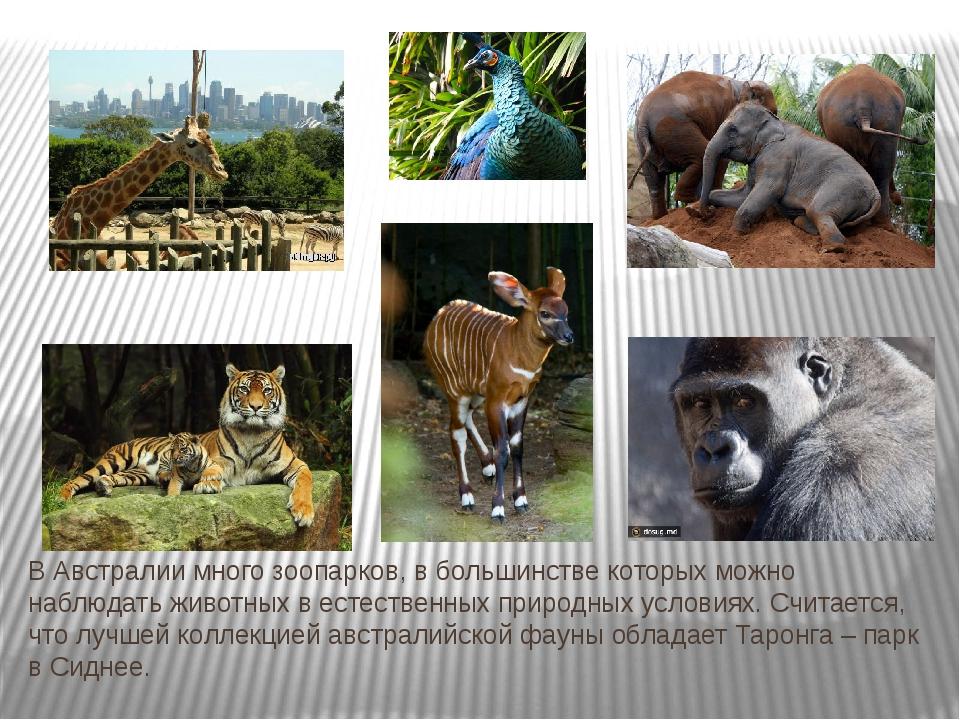 В Австралии много зоопарков, в большинстве которых можно наблюдать животных в...