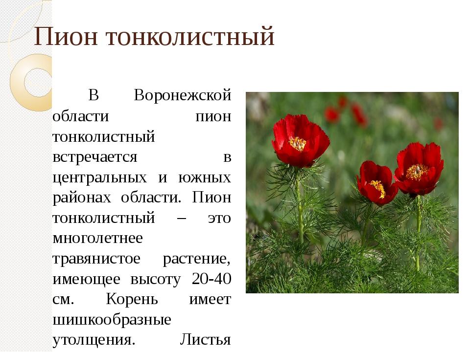 Пион тонколистный В Воронежской области пион тонколистный встречается в центр...
