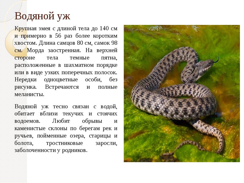 Водяной уж Крупная змея с длиной тела до 140 см и примерно в 56 раз более кор...