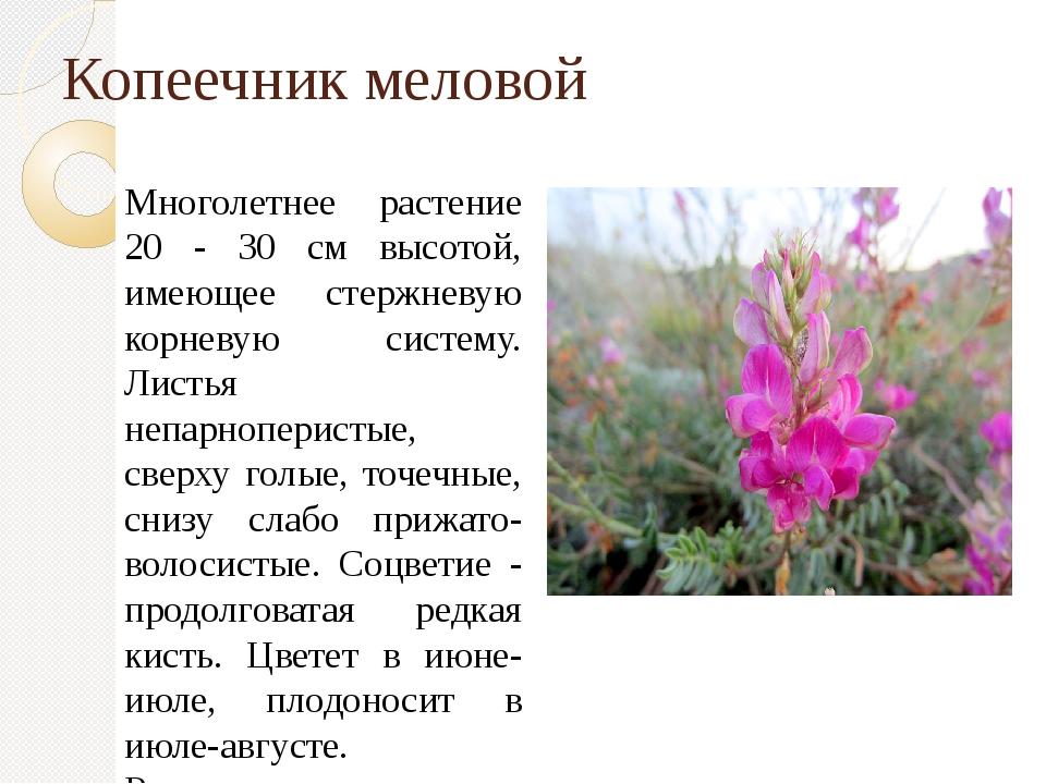Копеечник меловой Многолетнее растение 20 - 30 см высотой, имеющее стержневую...