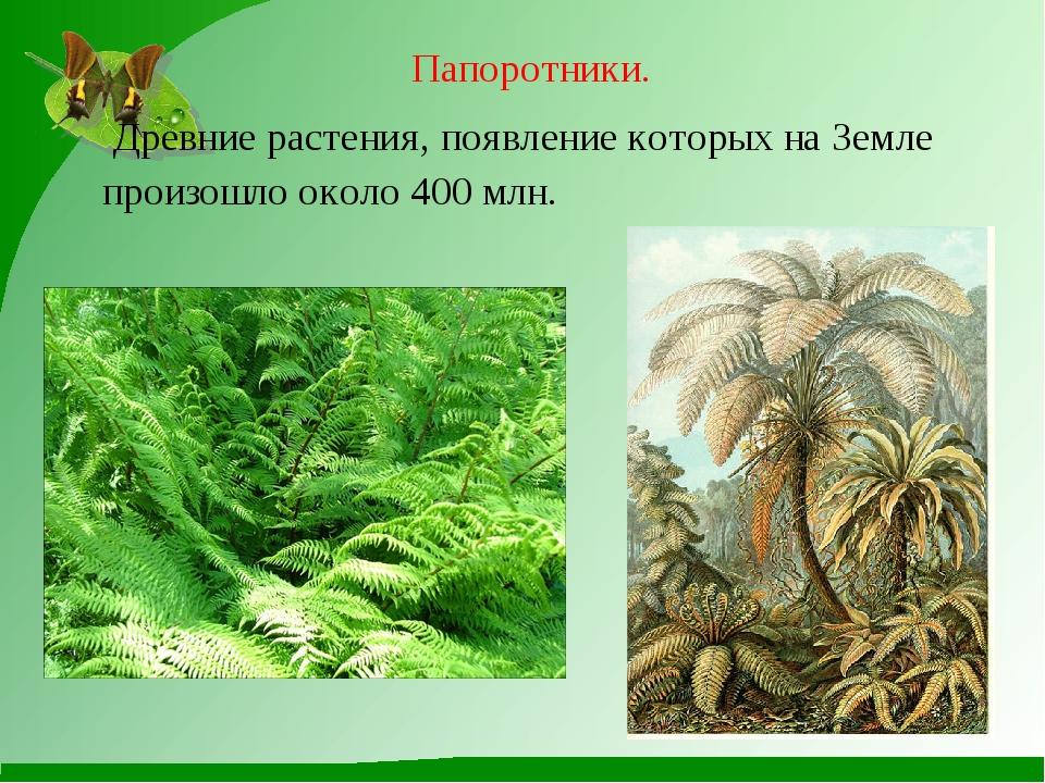 Папоротники. Древние растения, появление которых на Земле произошло около 400...