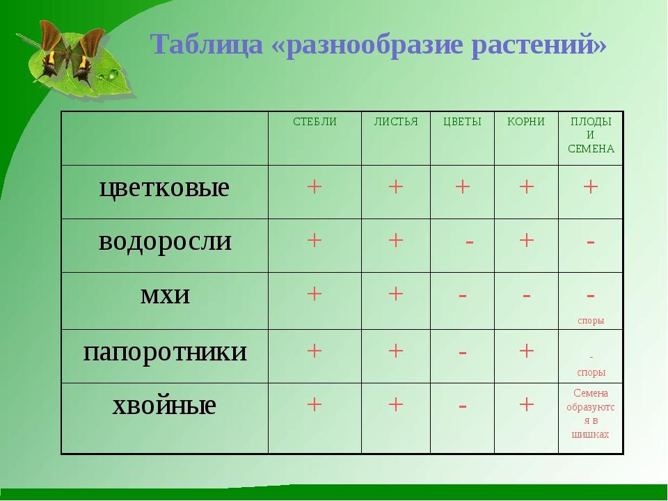 Таблица «разнообразие растений» СТЕБЛИЛИСТЬЯЦВЕТЫКОРНИПЛОДЫ И СЕМЕНА цве...