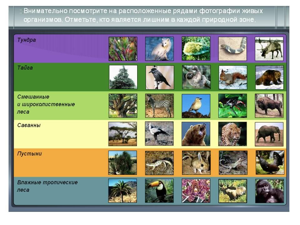 суть картинки животных и растений природных зон широкие