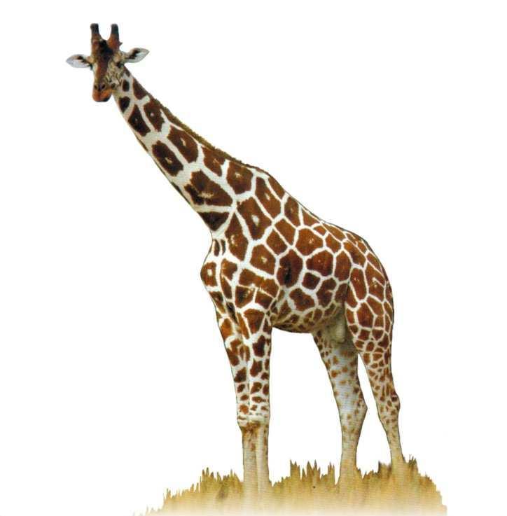 Картинка с жирафом и надписью, днем