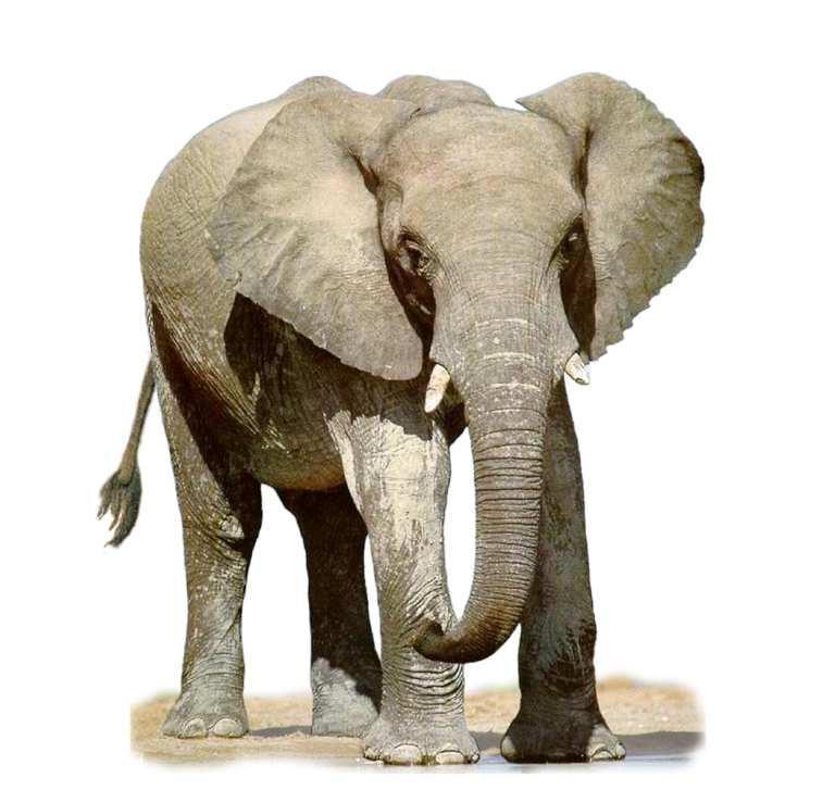 Картинки с надписью слоник, именами