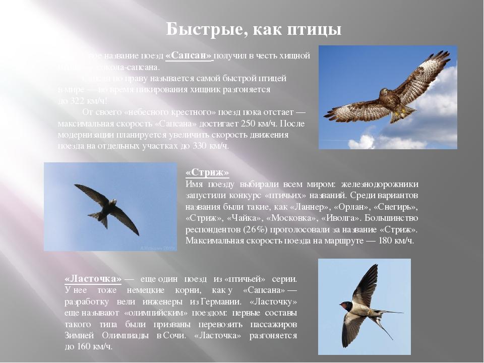 Свое название поезд «Сапсан» получил вчесть хищной птицы— сокола-сапсана....