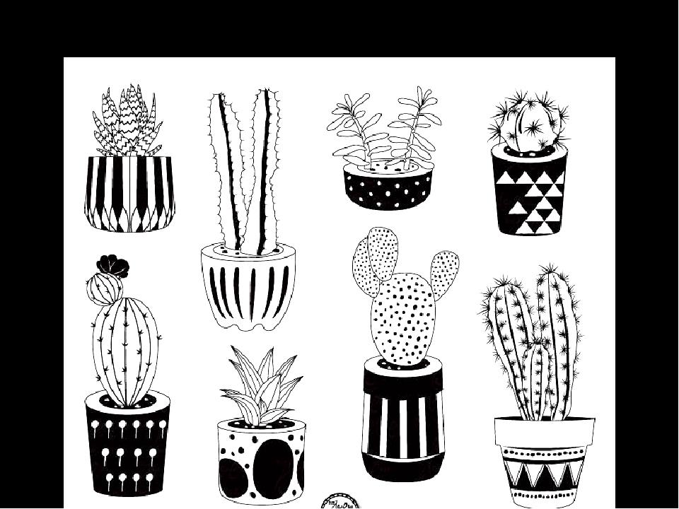 саланге картинки кактусы распечатать черно белое сшивают