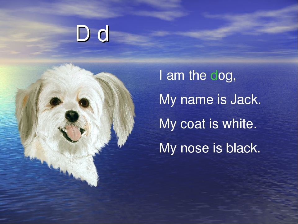 D d I am the dog, My name is Jack. My coat is white. My nose is black.