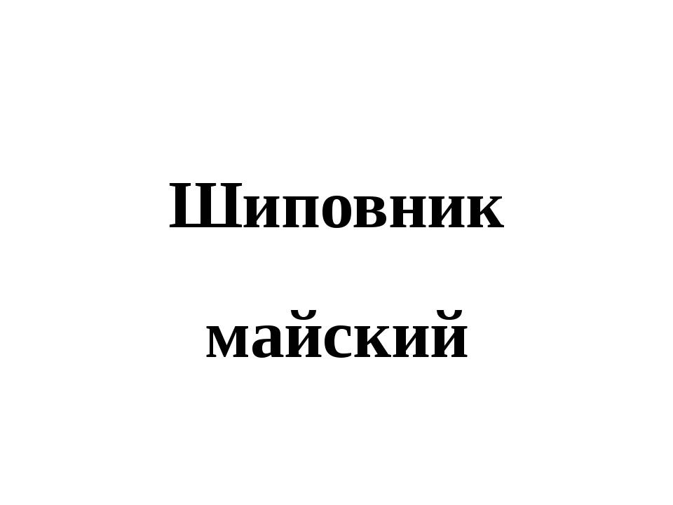 Шиповник майский