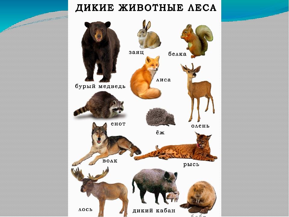 Дикие животные нашего леса картинки
