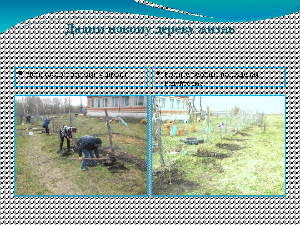 Дадим новому дереву жизнь Дети сажают деревья у школы. Растите, зелёные насаж...