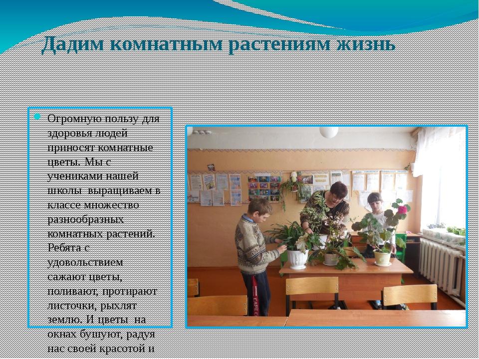 Дадим комнатным растениям жизнь Огромную пользу для здоровья людей приносят к...
