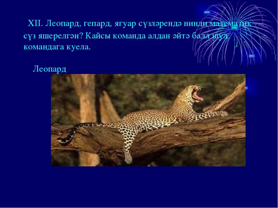 XII. Леопард, гепард, ягуар сүзләрендә нинди математик сүз яшерелгән? Кайсы...