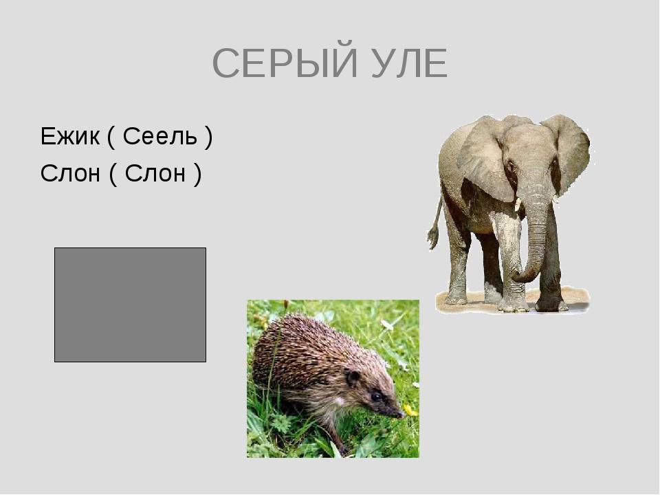 СЕРЫЙ УЛЕ Ежик ( Сеель ) Слон ( Слон )