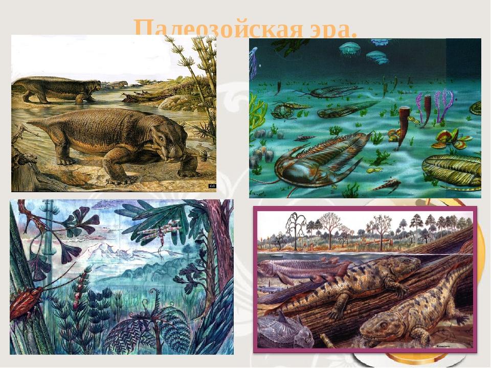 палеозойская эра с картинками отличается высокой