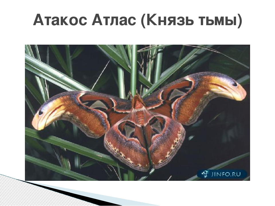 Атакос Атлас (Князь тьмы)
