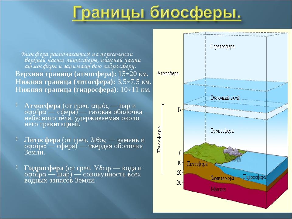 Биосфера располагается на пересечении верхней части литосферы, нижней части...