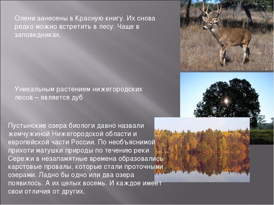 Олени занесены в Красную книгу. Их снова редко можно встретить в лесу. Чаще в...