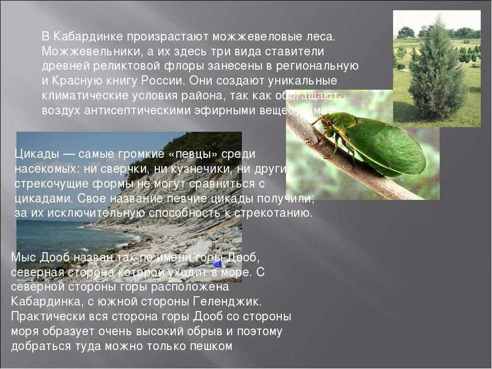 Цикады — самые громкие «певцы» среди насекомых: ни сверчки, ни кузнечики, ни...
