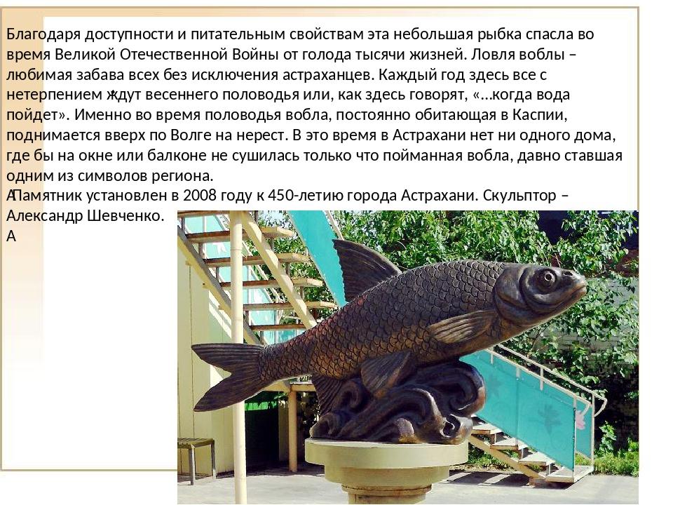 . Благодаря доступности и питательным свойствам эта небольшая рыбка спасла в...
