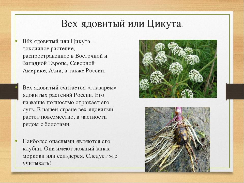 высокой урожайности вех ядовитый фото и описание них предназначены для