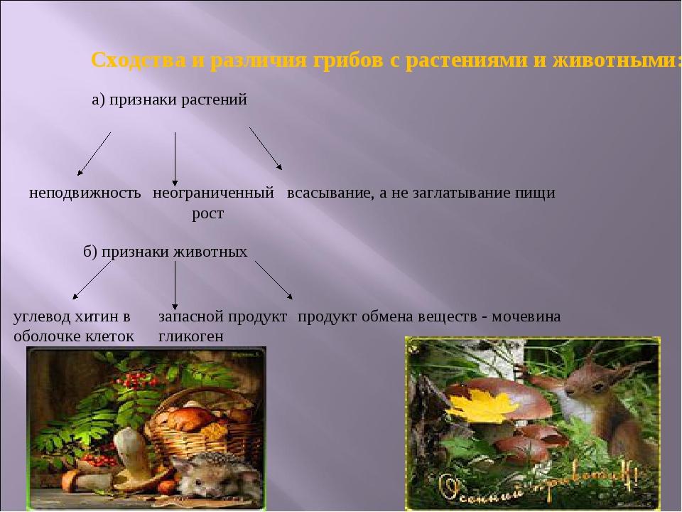 Сходства и различия грибов с растениями и животными: а) признаки растений неп...