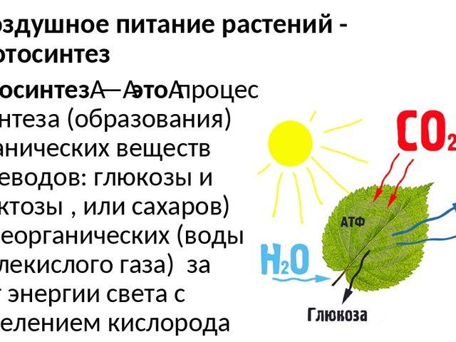 одна фотосинтез и бета синтез сможете выбрать