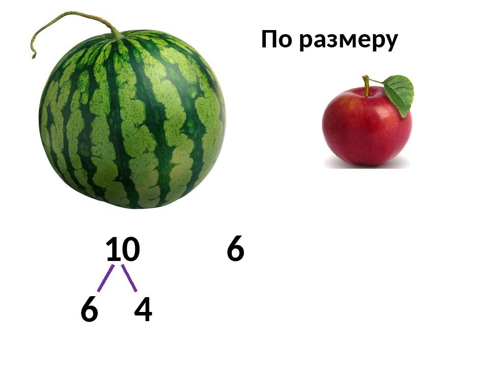 10 6 6 4 По размеру