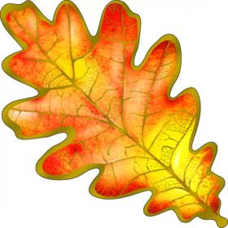 картинка кленового и дубового листа цвет