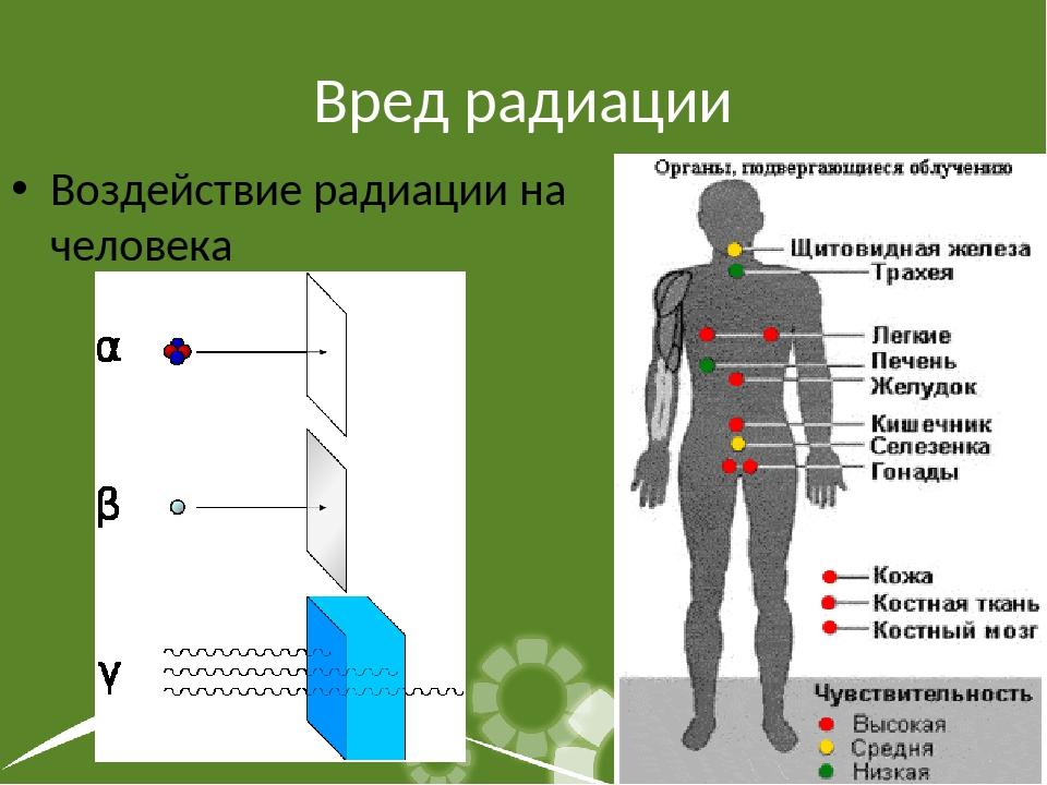 Вред радиации Воздействие радиации на человека