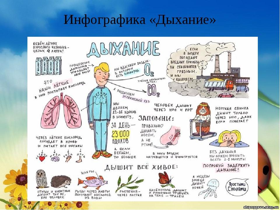 Инфографика «Дыхание»