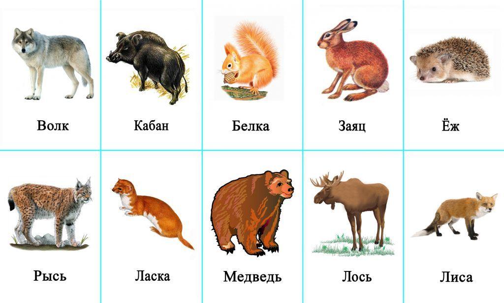 Набор картинок животные нашего леса