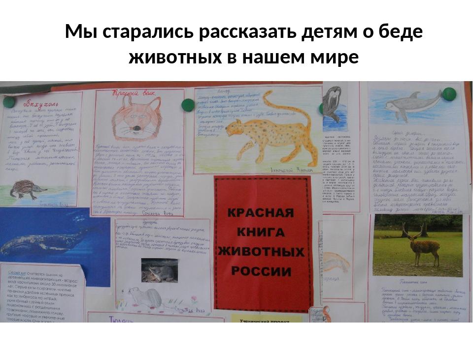 Мы старались рассказать детям о беде животных в нашем мире